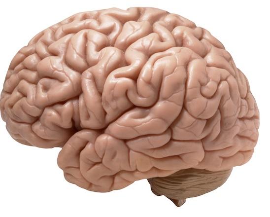 O que acontece dentro da cabeça quando ocorre um AVC?
