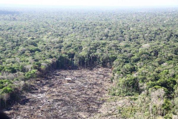 Participe da campanha #SejaLegalComAAmazônia, apoiada pela Coalizão Brasil